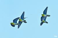 flying4.jpg